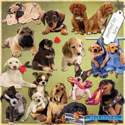 Клипарт животные - Милые щенята