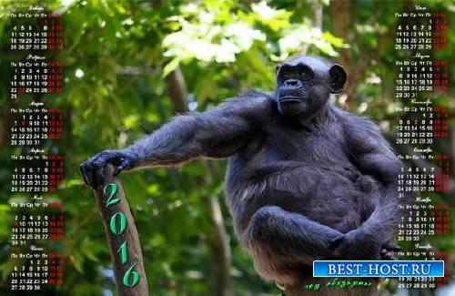 Календарь 2016 - Шимпанзе на дереве