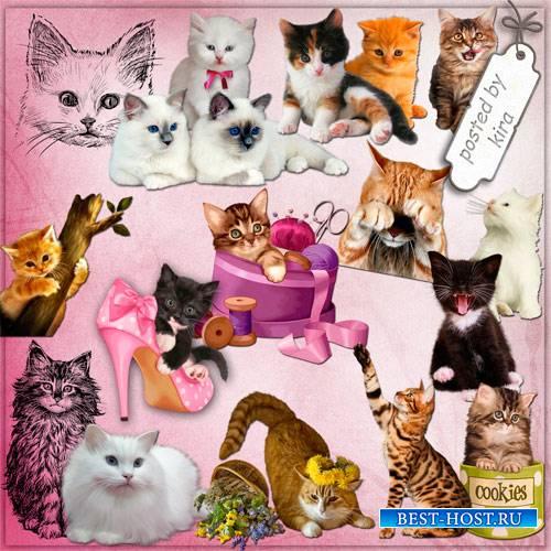 Клипарт в png - Коты, кошки и котята