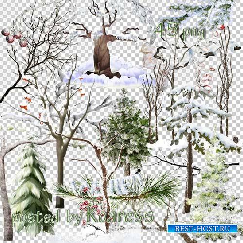 Клипарт на прозрачном фоне для дизайна - Зимние заснеженные деревья и ветки