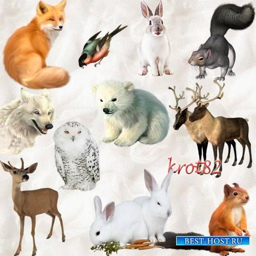 Клипарт png для фотошопа – Зимние животные и птицы