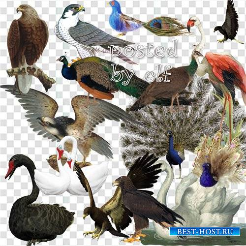 Птицы (орлы, павлины, лебеди и др.)
