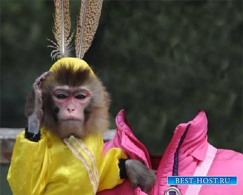 Шаблон для фото - С модной обезьянкой