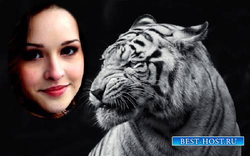 Рамка для фотомонтажа - Свирепый белый тигр