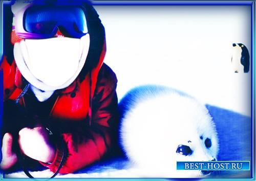 Psd - С морским котиком