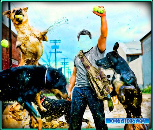 Шаблон - Парень и собаки
