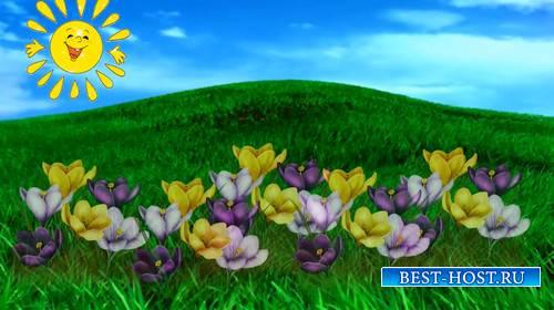 Футаж - Весенний луг с растущими цветами