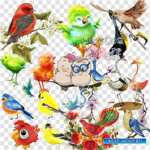 О чём щебечут птицы так звонко по весне - клипарт png