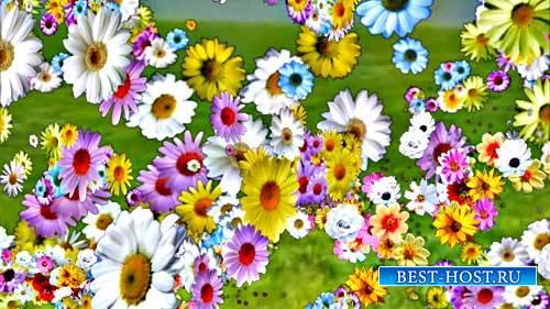 Футаж фона - Полетели вдруг цветы