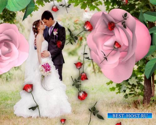 Футажи эффекты - Падающие розы