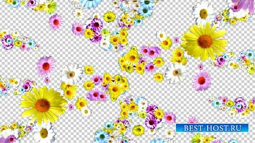 Футажи эффекты - Всем мои цветы в подарок