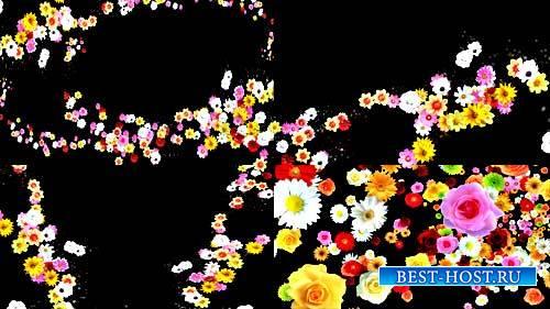 Футажи эффекты - Цветы,цветы,опять цветы