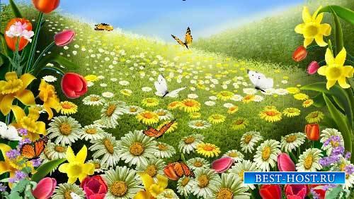 Футажи эффекты - Полет бабочек