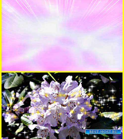 Футаж фона - Живой цветок