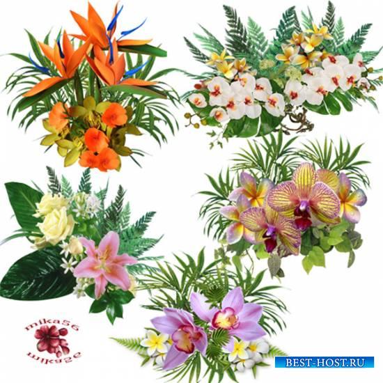 Клипарт – кластеры – Экзотические цветы