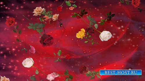 Футаж фона - Полет роз на красном фоне