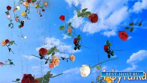 Футажи эффекты - Полет цветов
