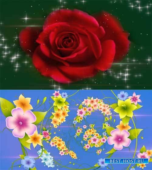 Футаж фона - Чудеса цветов