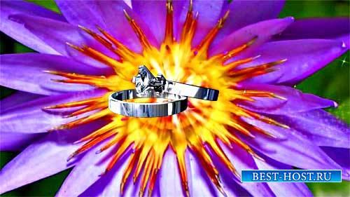 Футаж свадебная заставка - Цветок и кольца