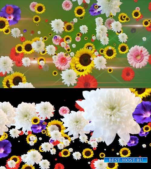 Футаж фона - Эти цветы сделали замечательный фон
