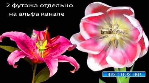Свадебные футажи - Чудеса в цветах
