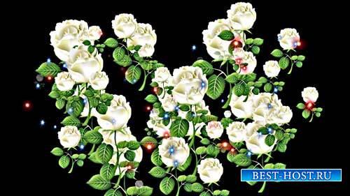 Свадебные футажи- Розы только для вас