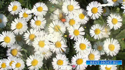 Футаж фона - Поляна цветов
