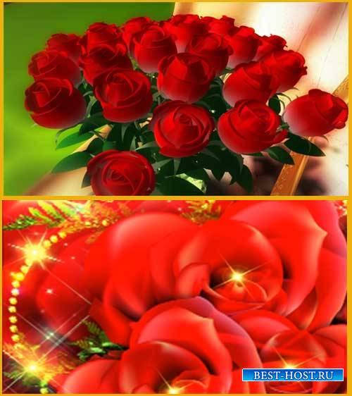 Футаж фона - Только розы