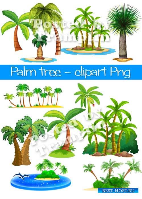 Пальмы, лето – Клипарт на прозрачном фоне