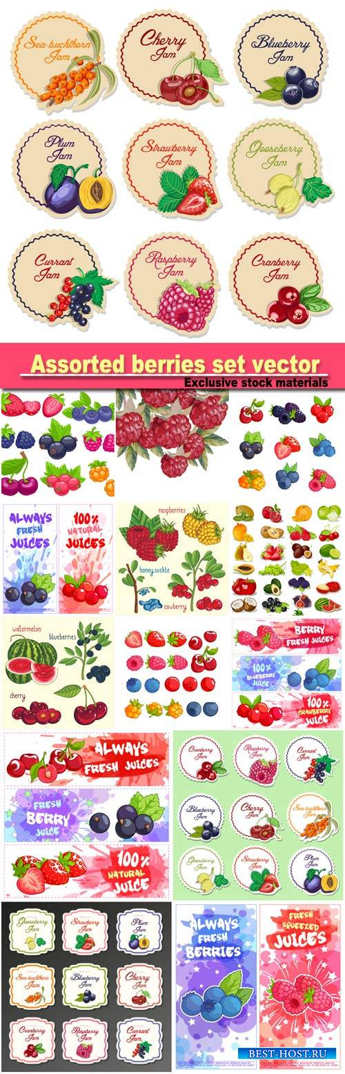 Assorted berries set vector illustration, set labels for jam from berries