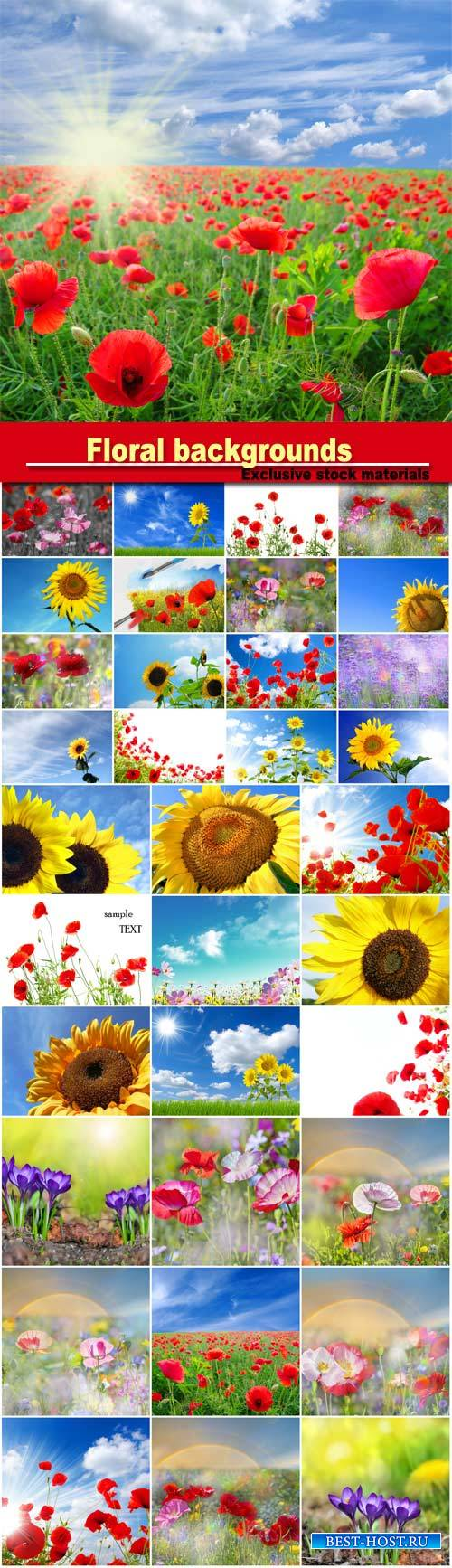 Background with sunflowers and poppies