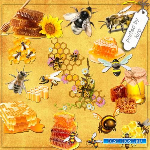 Клипарт к медовому спасу - Медовые соты и пчелы