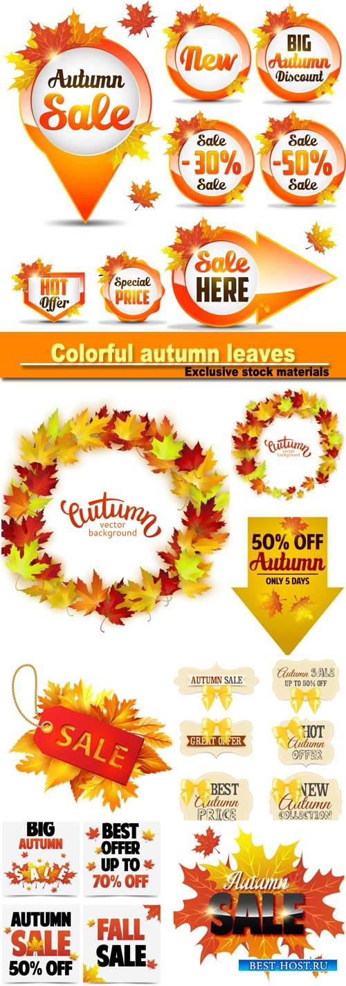 Vector colorful autumn leaves, card template, discount tag with fall leaves