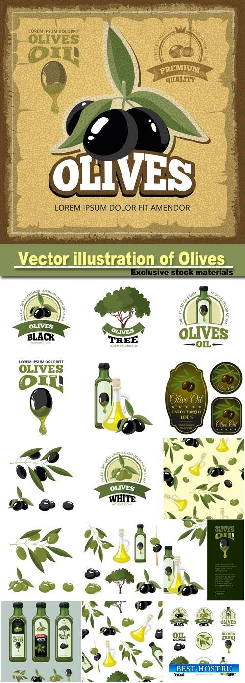 Vector illustration of Olives, tree, oil botles and leaf isolated on light  ...