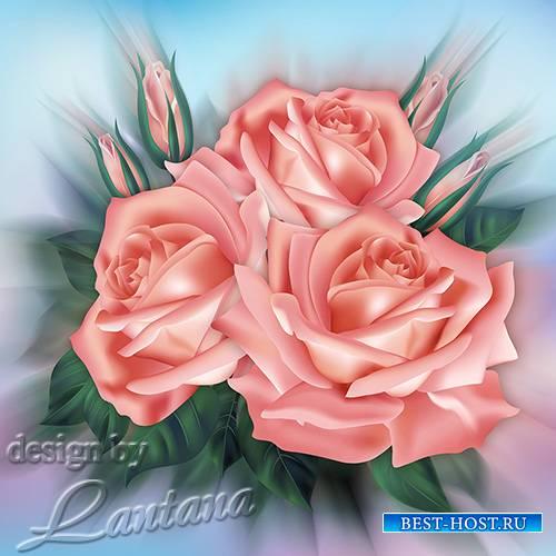 PSD исходник - Букет прекрасных роз