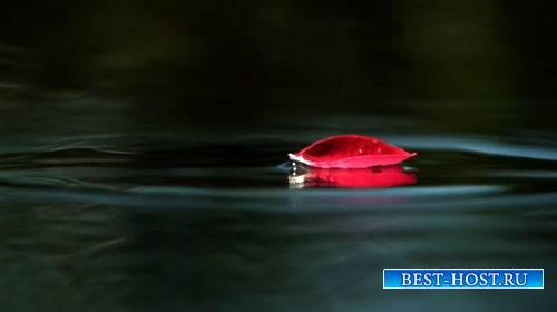 Футаж - Лепесток розы падает в воду