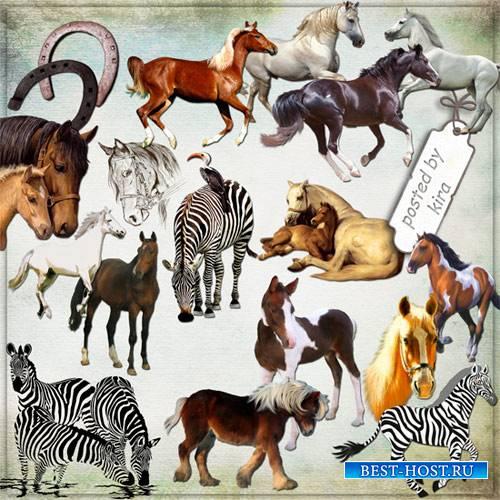 Клипарт - Лошади, зебры на прозрачном фоне