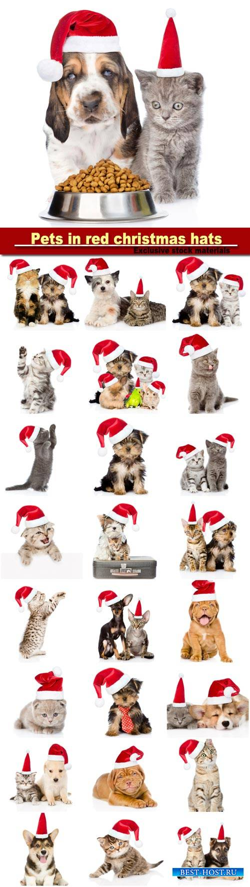 Group of pets in red christmas hats, isolated on white background