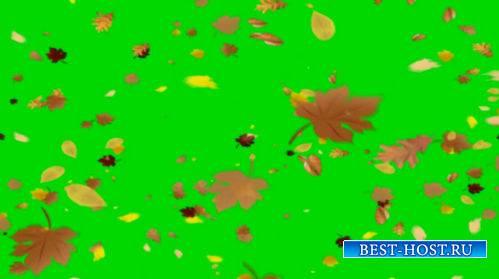 Футаж на хромакее - Падают осенние листья