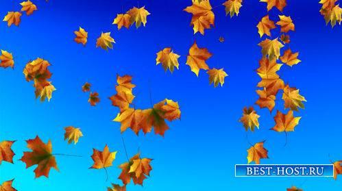 Футаж - Падающие осенние листья на голубом фоне