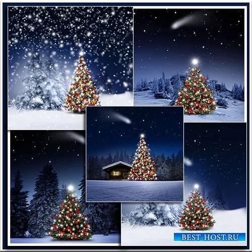 Новогодняя ель в ночном лесу - Christmas fir tree in the night forest