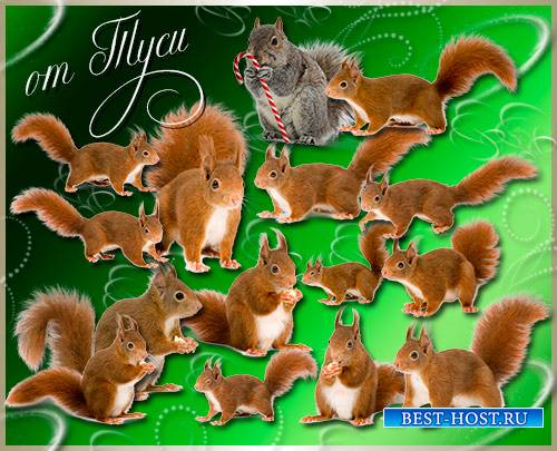 Клипарт - Белки / Clipart - Squirrel
