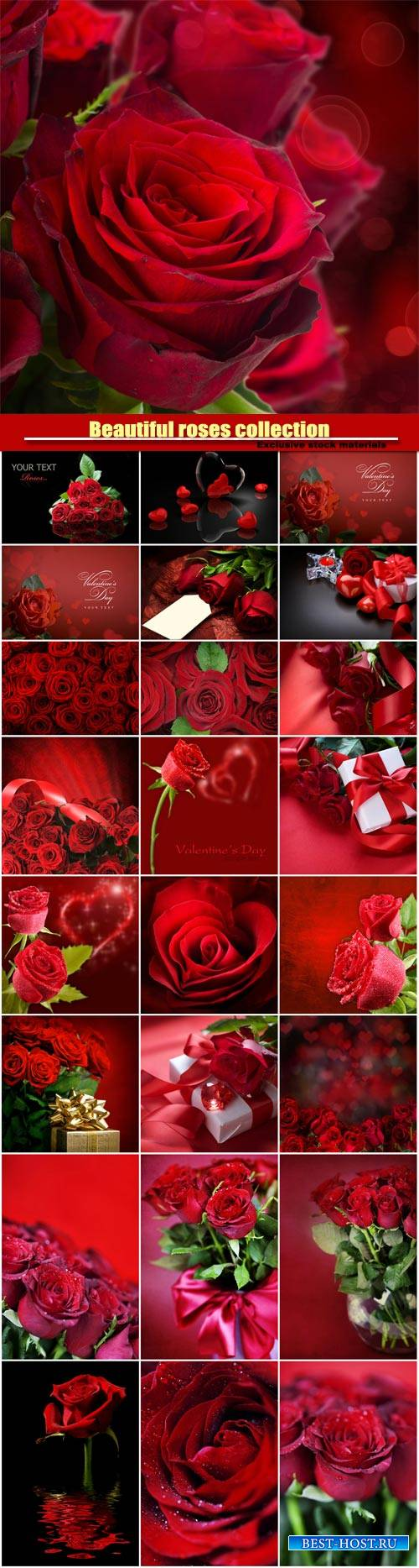 Beautiful roses, romantic collection backgrounds