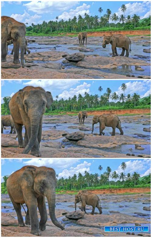 Sri Lankan elephant by the river HD