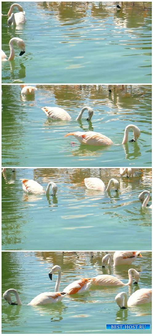 Footage White swans floating on a pond