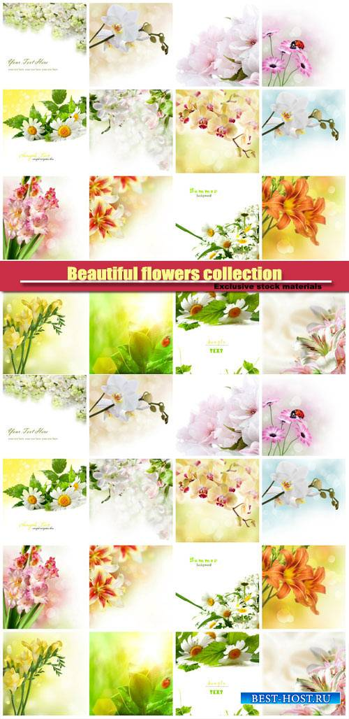 Beautiful flowers collection