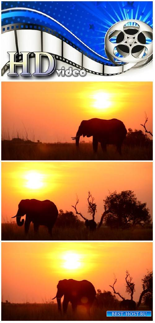 Video footage African landscape with elephant