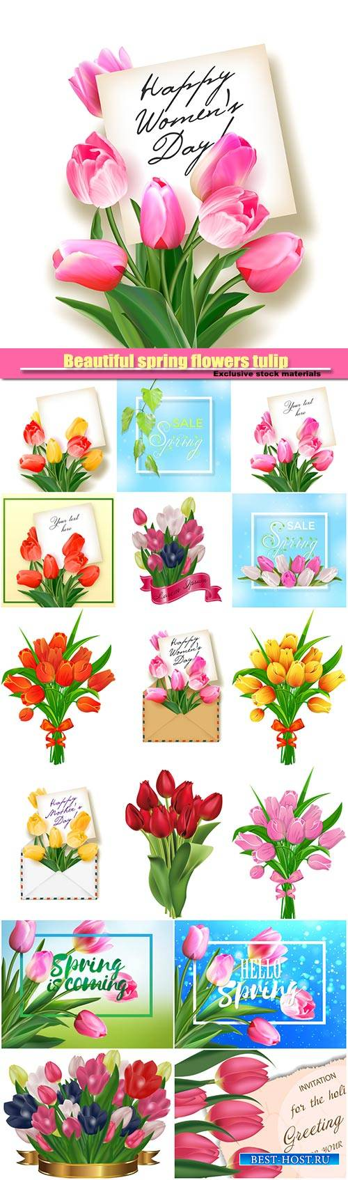 Beautiful spring flowers tulip vector