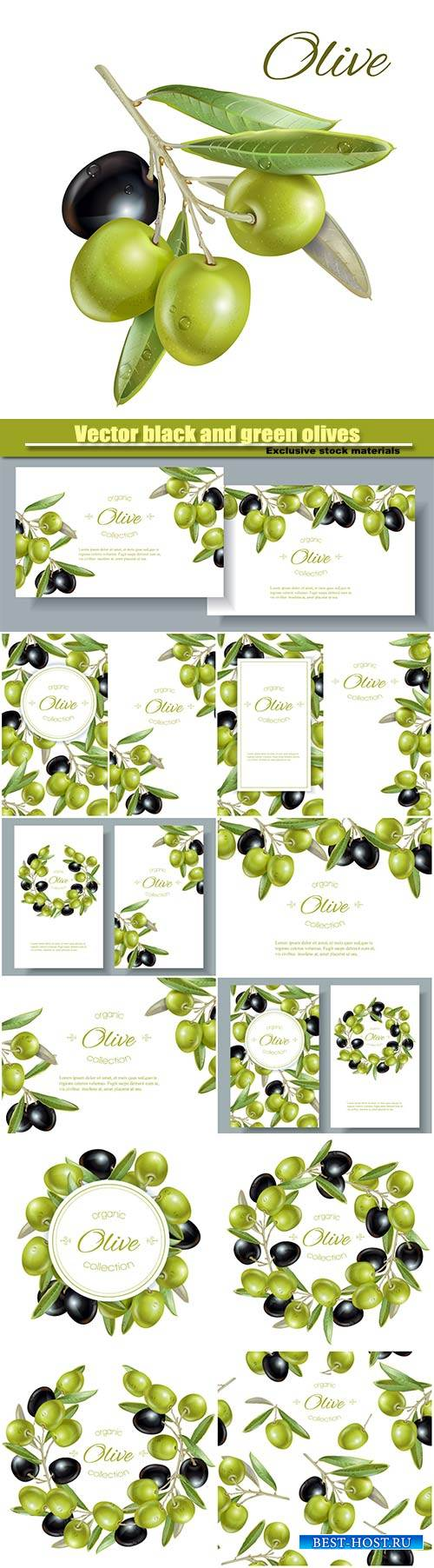 Vector black and green olives on white background