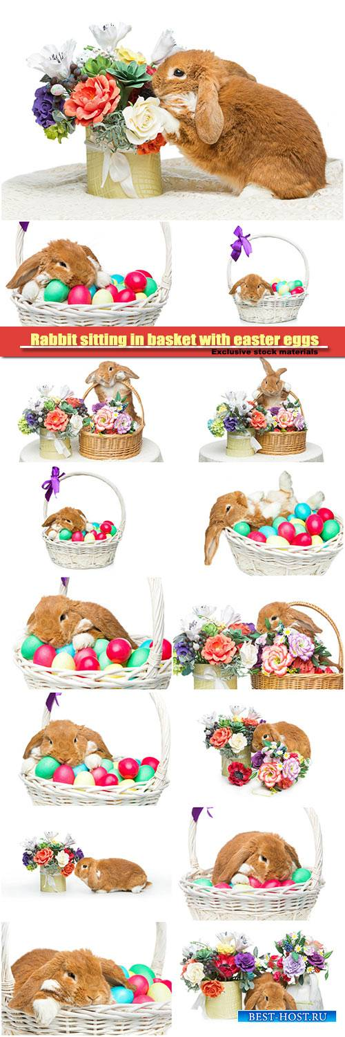 Adorable rabbit sitting in basket with easter colored eggs